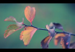 November Day by Limaria