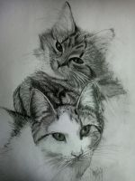 my cats by tonez1
