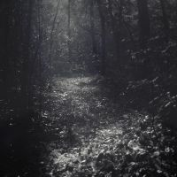 Forest Of Make Believe by LaMusaTriste