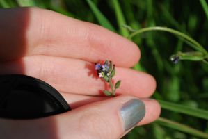 Very Tiny Flowers by chamberstock