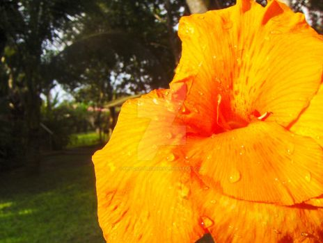 Orange Flower by EpicGaylordBrian