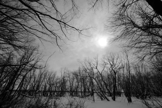 Cold White Light by Grimlord666