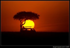 Safari Sunset... by dogansoysal