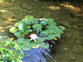 Lilly Pond 1 by Loulou13