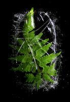 Ice fern by sourcow