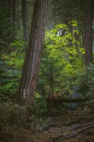 The Forest 2 by JForbes1701
