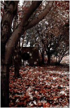 Desaturated like Autumn by JrFulci