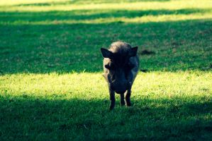 want some wild boar? by CarlosArthur