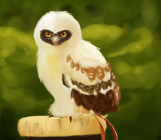 Spectacled Owl by TheDemonSurfer