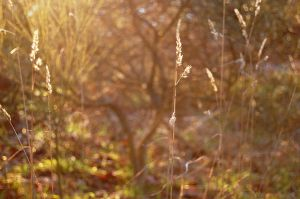 Needle in the Hay by Oranjes