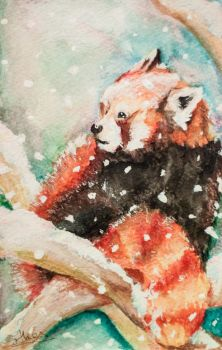Red Panda in the Snow by esther-rose-mouse