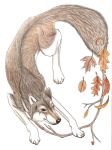 Autumn Wolf- Print by Sgt-Nelson