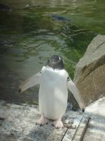 Poser Penguin by Life-In-Bloom