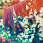colors of autumn by TrishaMonsterr