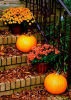 Fall Pumpkins by explicitly