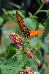 Orange butterfly 2 by LucieG-Stock