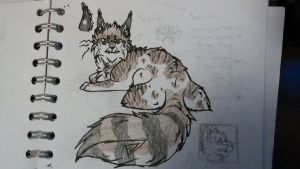 Maine Coon Cat *AUCTION* Ended by Evertooth