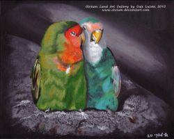 Parrots Couple by Olvium