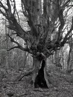Evil Tree by mikithemaus
