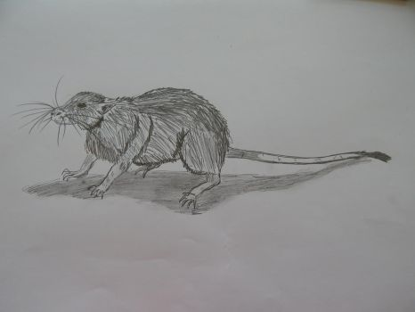 Fat Sand Rat by thevoi