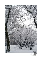 :: snowing by moiraproject