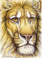 ACEO - Lion by synnabar