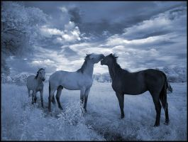 Blue Horses I infrared... by MichiLauke