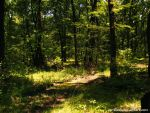 Summer In The Woods by eMBeeL