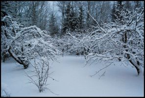 Winter Wonders VI by Eirian-stock