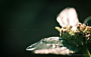 Flower II: Just For You 1 by reubenteo