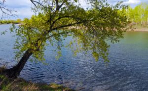 Tree over the river by Korolevatumana