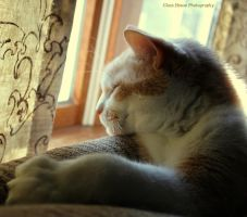 Jasper Dreaming by GlassHouse-1