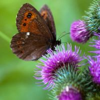 Butterflies and Hurricanes II by 1uno