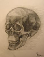 The skull by OmegaLioness