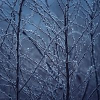 Blue Winter by JoannaRzeznikowska