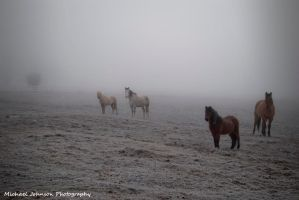 Horses in the Fog by MTJforever