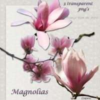 Magnolia's by libidules