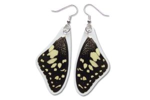 Real Citrus Swallowtail Butterfly Wing Earrings by TheButterflyBabe