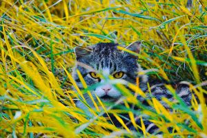 Cat hides by Emmatyan