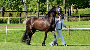 Friesian 26 by JullelinPhotography