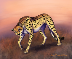 cheetah by ZhBU