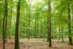 Foret21 by hubert61