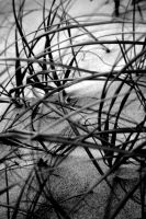 Beach Grass by the-wandering-child
