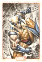 wolvie 2 by AnthonyTAN7775