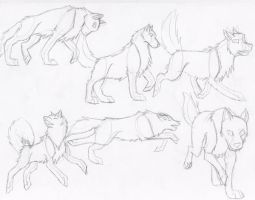 More Wolf Poses by DrawingMaster1