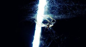 Spider by RayScream