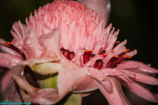 Pretty Pink by Moohoodles
