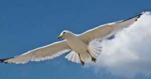 Seagull 3 by erl-stock