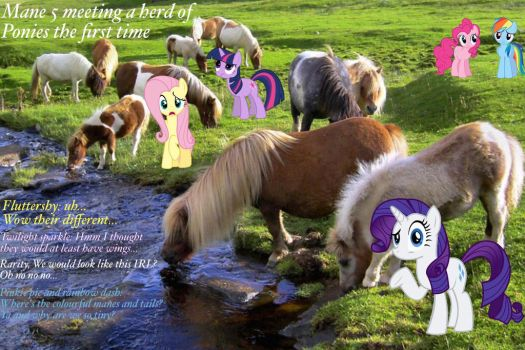 Herds of horses by Ponyfriendsforever44