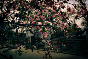 Spring at the Zoo by Due-South